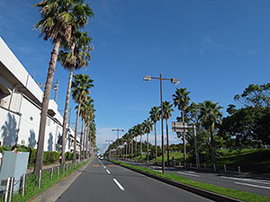 ワシントンヤシ並木 葛西臨海公園の北側の道路で、左の高架は京葉線です。葛西臨海公園駅のすぐ東..