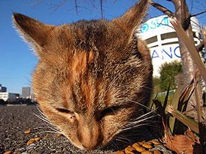 勝島運河の猫