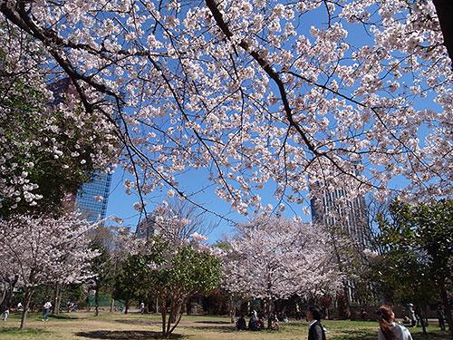 亀塚公園の桜が満開