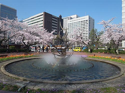 桜と噴水と虹
