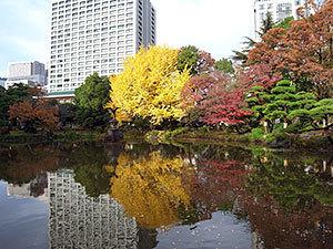 日比谷公園の銀杏
