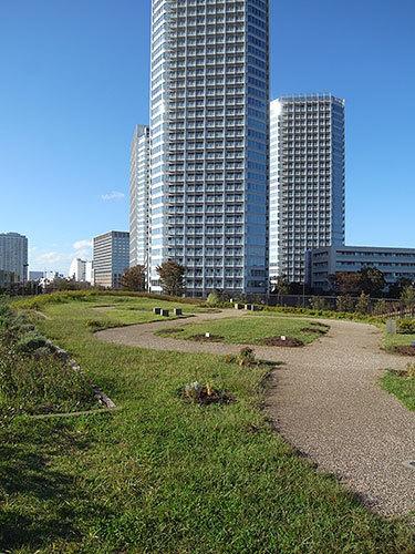 二子玉川公園と二子玉川ライズタワー