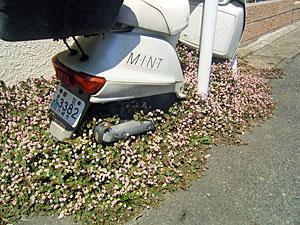花に埋もれるミニバイク