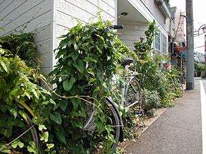 緑に覆われる自転車
