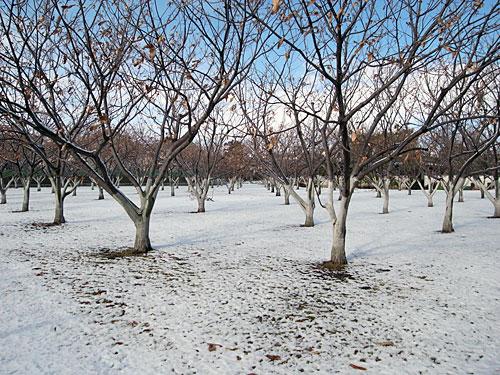 生産緑地の果樹園