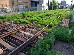 草の生える線路