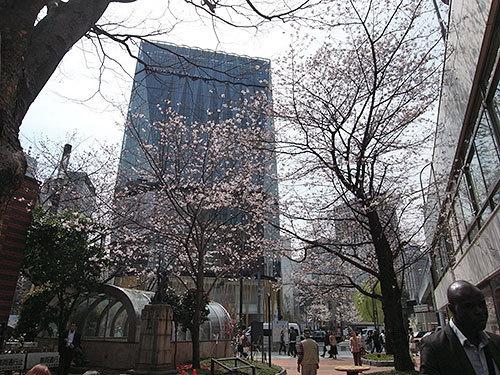 東急プラザ銀座と桜