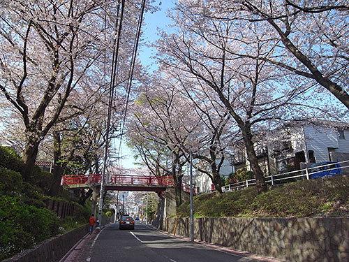 桜坂(田園調布本町)