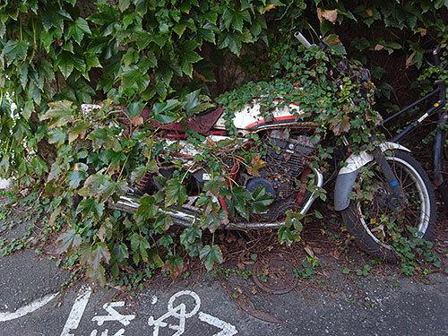 緑に覆われるバイク(東)
