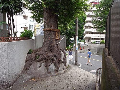 ケヤキの大木のある坂道(恵比寿南)